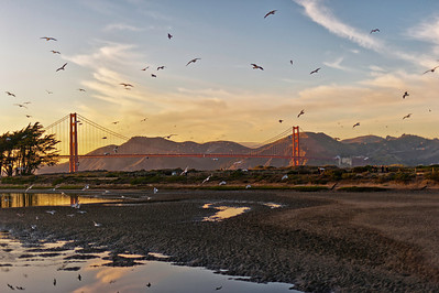"""Pure Poetry"" - Golden Gate Bridge from Chrissy Field, San Francisco"