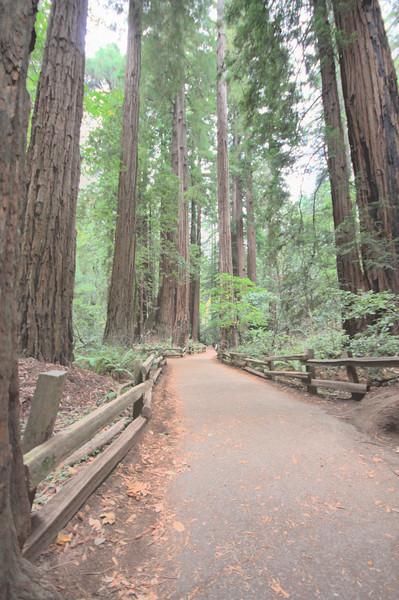 Muir Woods Path HDR