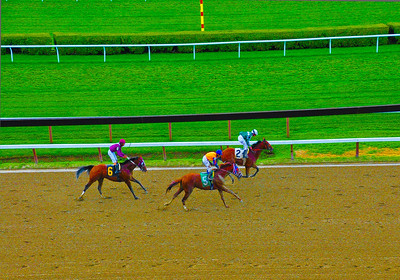 """""""And The Winner is Zivo!"""" Saratoga Race Course, Saratoga Springs, NY."""