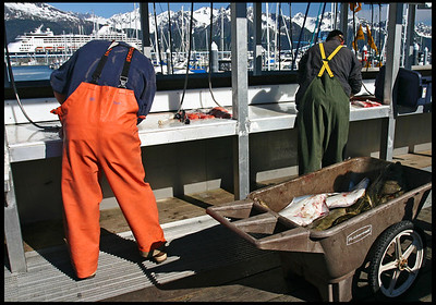 Sports Fishing at Seward Boat Harbor
