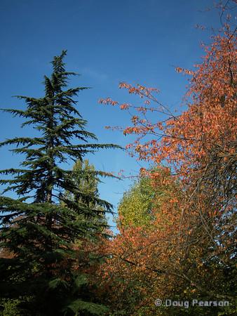 Various trees in Kensington Gardens, London, UK