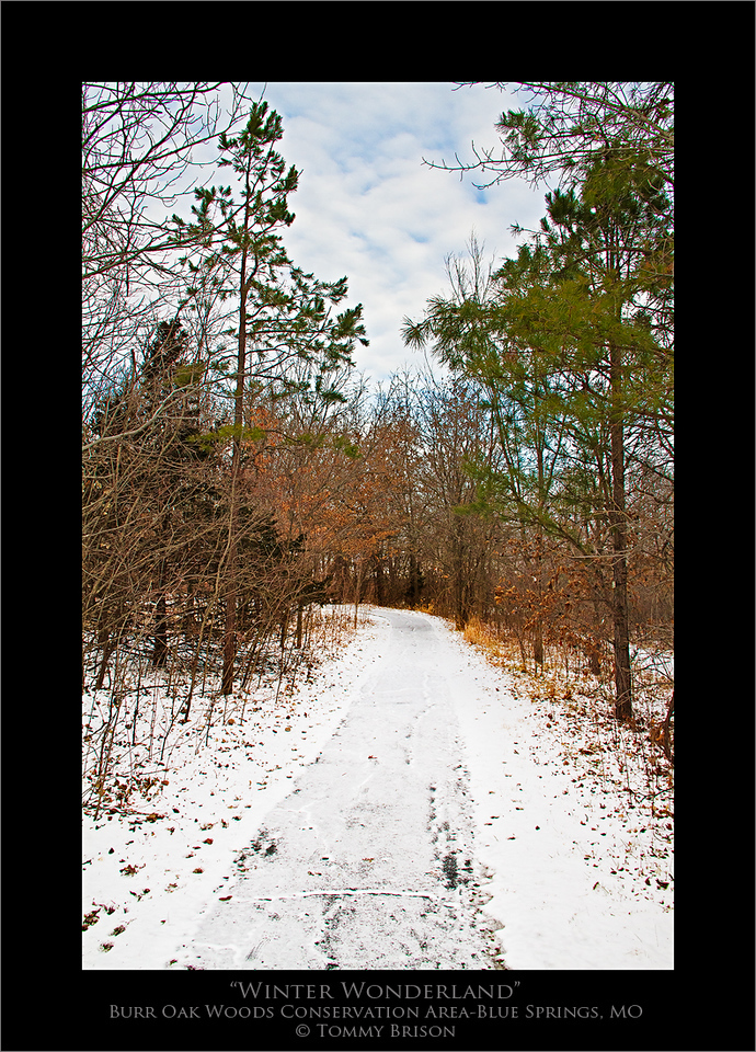 Taken on Jan. 12, 2012 at Burr Oak Woods Conservation Area in the cold sub-zero windchills.  Needless to say, my tracks were the only tracks this morning on the trail.