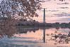 Washington Monument at Sunrise - Cherry Blossoms