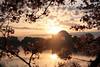 Sunrise at the Jefferson Memorial - Cherry Blossoms