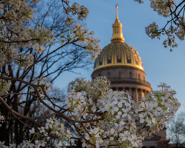 Trees flowering on the ground of the West Virginia State Capitol