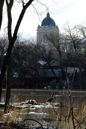 Manitoba Legislature and two Canada geese resting on the swelled Assiniboine River.
