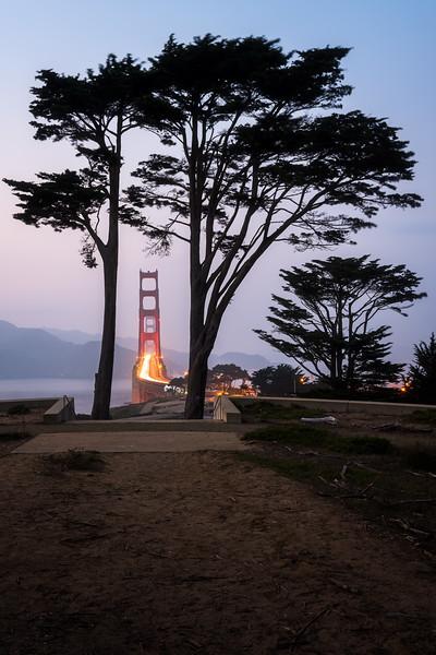 Golden Gate Bridge framed through the Cypress trees, San Francisco