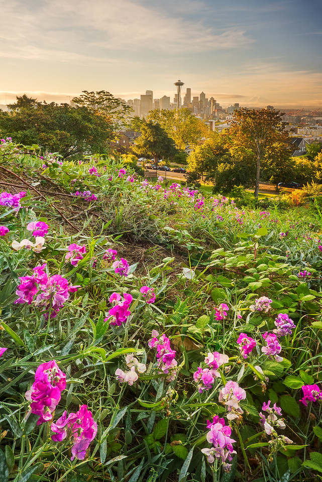 Kerry Park wildflowers, Seattle WA