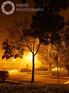 Tree in a foggy night in Petworth neighborhood in Washington, DC.
