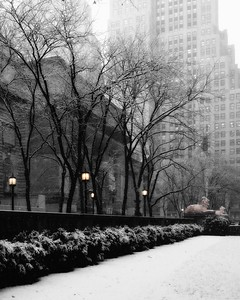 New York Library in Winter