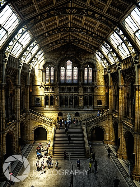 Rare beams of sunlight at the Natural History Museum in London