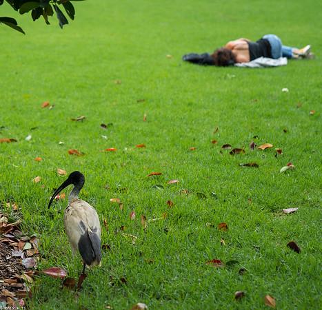 The Royal Botanic Garden, Sydney
