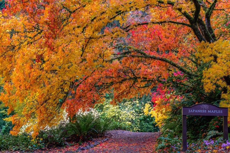 Woodland Garden Dream