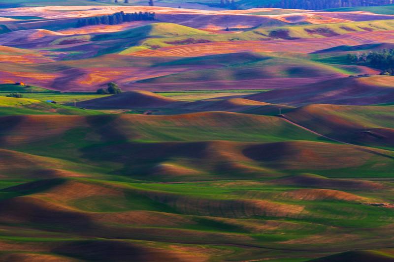 Mystical Fields