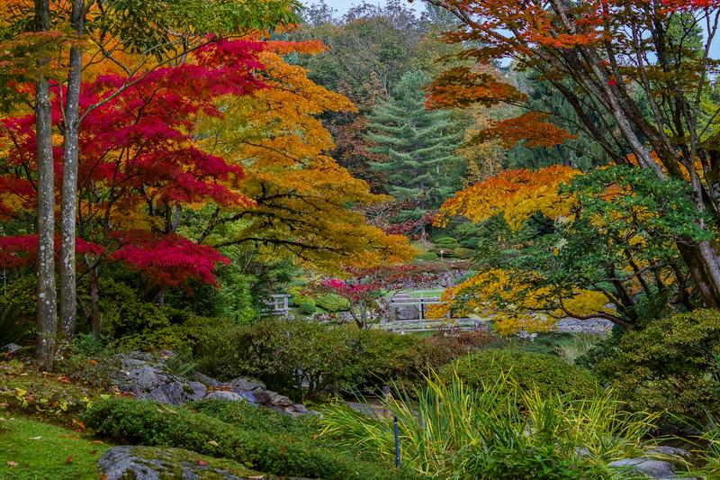 The Tints of Autumn