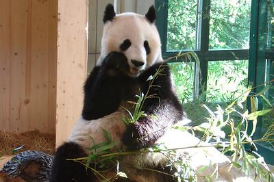 Dag 6: Zoo van Wenen