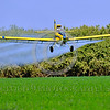 CropDuster 0018 A low flying turbo-prop Air Tractor Inc  AT-401 crop duster, N9179N, spraying a field in Wasco, California 8-2017 crop duster picture by Peter J  Mancus     DONEwt