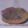 Civil War belt buckle found at Antietam battlefield