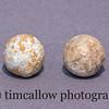 Civil War .69 cal round shells from a Confederate camp near Sharpsburg, Md.