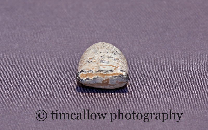 Civil War Fired Bullets from 2nd Bull Run