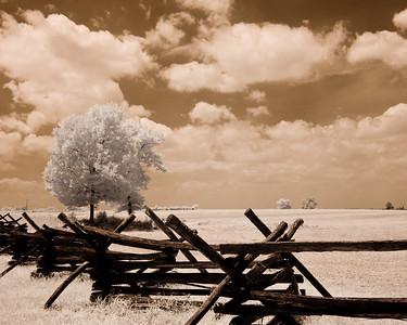 Cornfield Fence