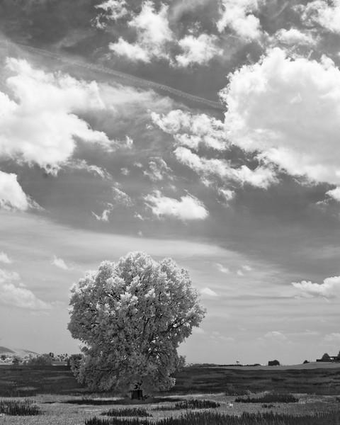 Big Sky at Cornfield