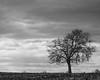 Monocacy Best Farm Tree