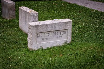 Mr Prospector