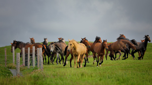 Wild horses at Cliffs of Moher-1L8A9963
