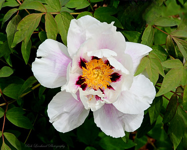 Pretty flower in Clark Botanic Garden.