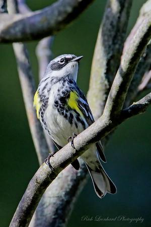 Pretty bird in Clark Botanic Garden.