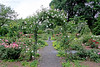 Beautiful Rose Garden at Clark Botanic Garden.