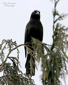 Crow at Clark Botanic Garden.
