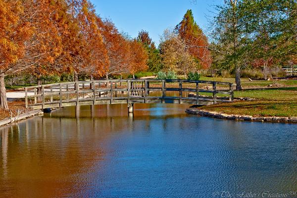Fall at Clark Gardens 2010