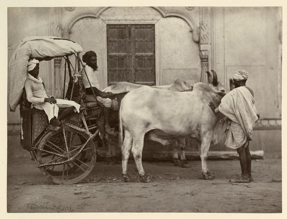 Ekka Cart 1859 Shepherd