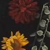 Annabel flowers