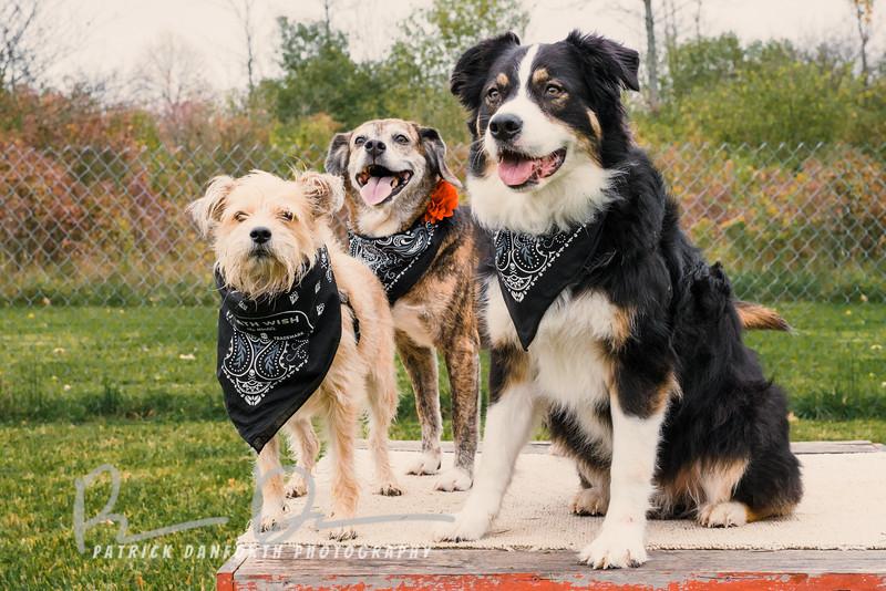 Tailer, Emily and Bear