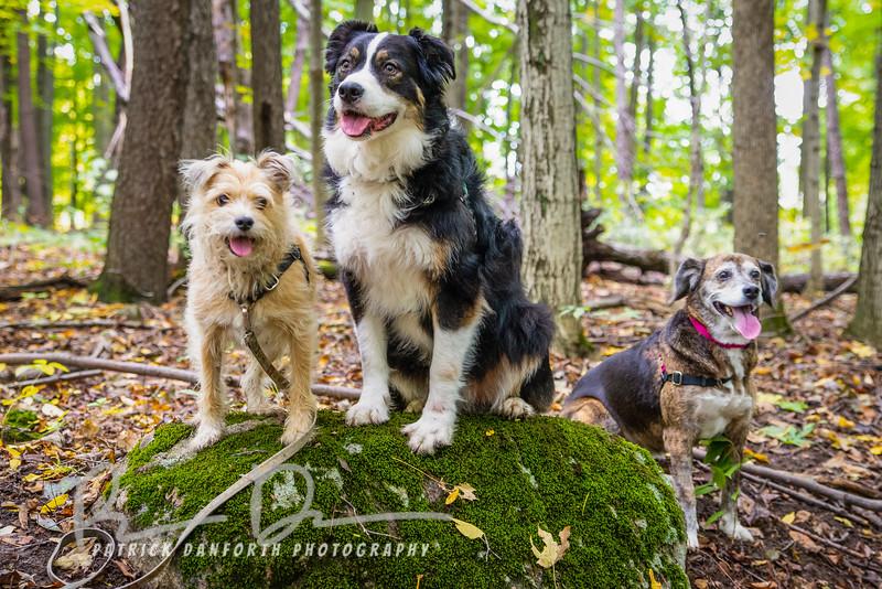 Bear, Tailer and Emily