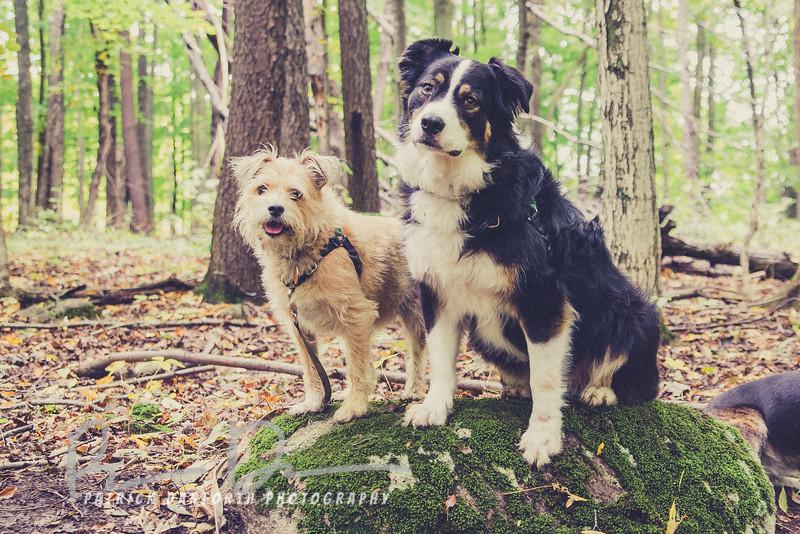 Tailer and Bear