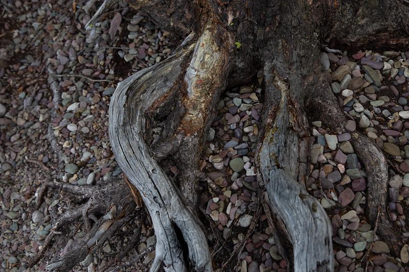 River Rocks & Roots