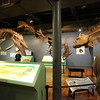 """Inside """"Savage Ancient Seas,"""" a featured exhibition at the SCSM."""