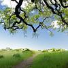Tree + Trail