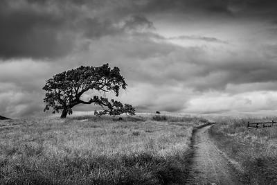 Rush Creek + Oak