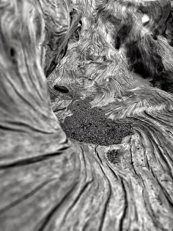 Sand + Driftwood Study #1