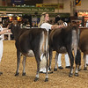 Royal16_JerseyYearlings_1M9A9827