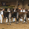 Royal16_JerseyYearlings_1M9A9828