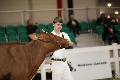 Classic 4-H Dairy Show 2016
