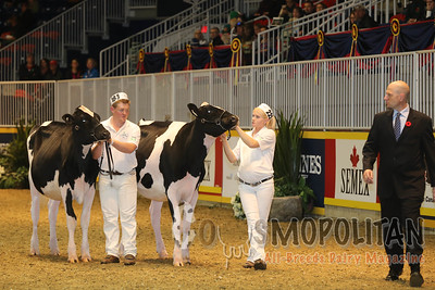 Classic 4-H Senior Calf Finals