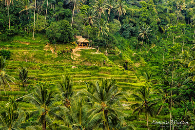 The Tegallalang Rice Terraces in Ubud are famous for their beautiful scenes of rice paddies and their innovative irrigation system