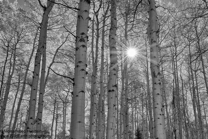 Aspen Blaze - Castle Creek Road, Aspen, CO
